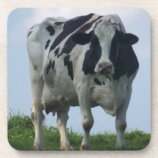 Vermont  Black and White Dairy Cow Coaster