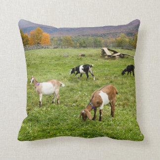 Vermont Goats Pillow