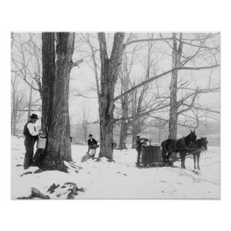 Vermont Maple Sugar Camp, 1906. Vintage Photo Poster