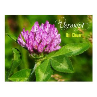 Vermont State Flower: Red Clover Postcard