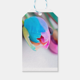 Vertical shoot of unusual multi colored tulip pack of gift tags