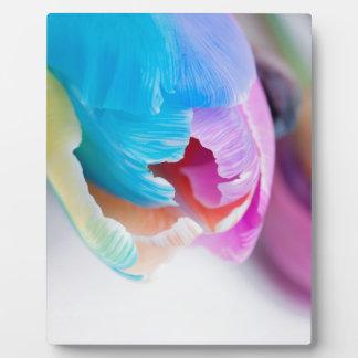 Vertical shoot of unusual multi colored tulip plaque