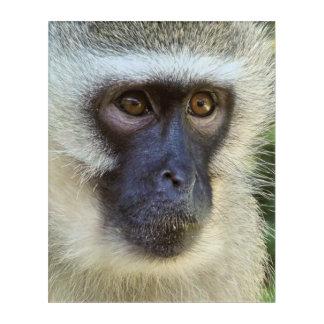 Vervet monkey acrylic wall art