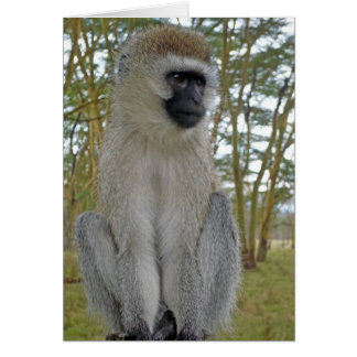 Vervet Monkey Card