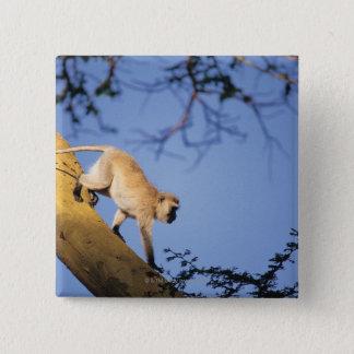 Vervet monkey on tree branch , Serengeti 2 Inch Square Button