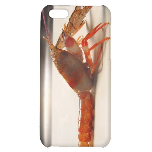 Very Small Lobster iPhone 5C Covers