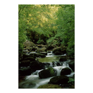 Very Special Woodland Stream Poster. Poster