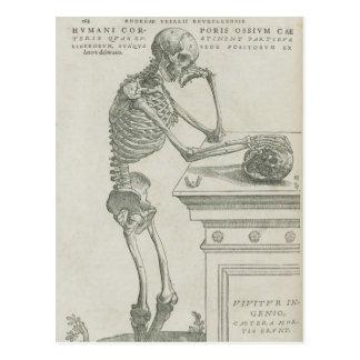 Vesalius Skeletal Image Postcard