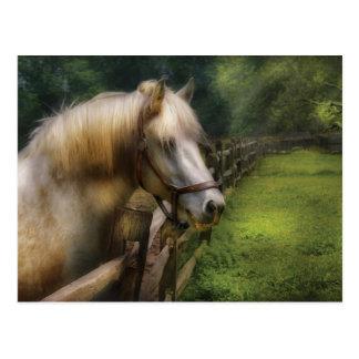 Veterinarian - White Stallion Postcard