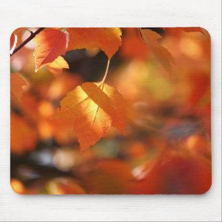 Vibrant Autumn Leaves Mousepad