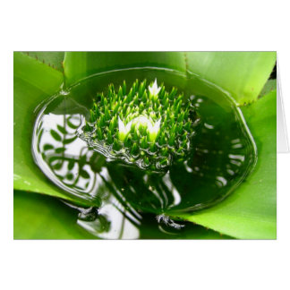 Vibrant green bromeliad notecard. note card