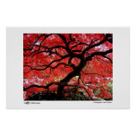 Vibrant Leaves - Photo of the Year Finalist Poster