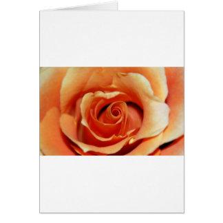 Vibrant Orange Rose Card