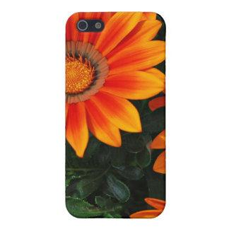 Vibrant Orange & Yellow Flowers iPhone 5 Covers