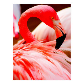 Vibrant Pink Feather Flamingo Postcard