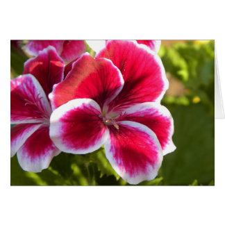 Vibrant pink geraniums card