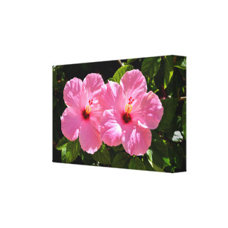 Vibrant Pink Hibiscus Flowers Canvas Print