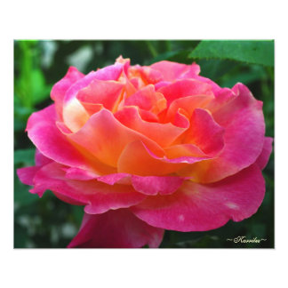 Vibrant Pink Rose Photography by Karrilee Photographic Print