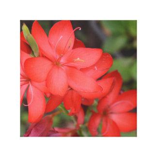 Vibrant Red Flower, Tasmania, Australia Canvas Print