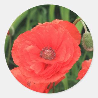 vibrant red poppy classic round sticker