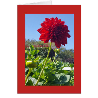 Vibrant Red Zinnia Card