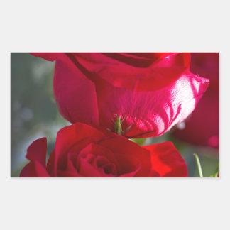 Vibrant Romantic Red Roses