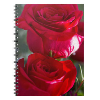 Vibrant Romantic Red Roses Notebooks