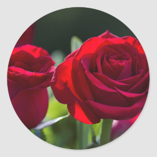 Vibrant Romantic Red Roses Round Sticker