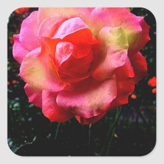 Vibrant Stunning Colorful Spring Rose Square Sticker