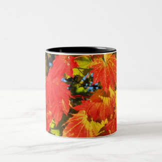 Vibrant vine maple in fall 11 oz Two-Tone Mug
