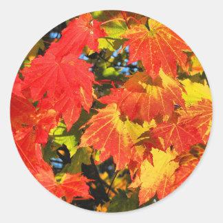 Vibrant vine maple round stic1½ inch (sheet of 20) classic round sticker