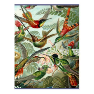 Vibrant Vintage hummingbirds art exotic tropical Postcard