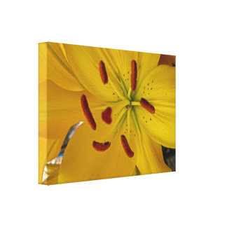 Vibrant Yellow Lily Canvas Print