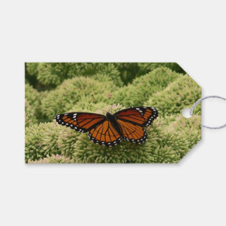 Viceroy Butterfly Beautiful Nature Photography Pack Of Gift Tags