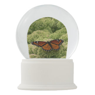 Viceroy Butterfly Beautiful Nature Photography Snow Globe