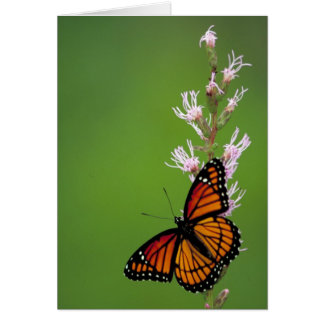 Viceroy butterfly on Dense Blazingstar Card