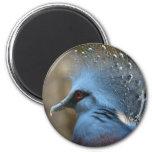 Victoria Crowned Pigeon Refrigerator Magnet