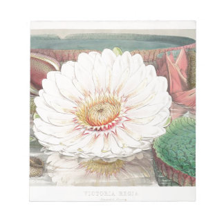 Victoria Regia. Vintage Water Lily illustration Notepad