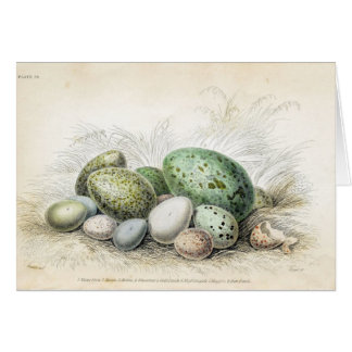 Victorian Print of Various Bird Eggs Card