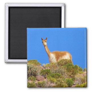 vicuña blue square magnet