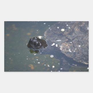 vieille natation de tortue stickers rectangulaires