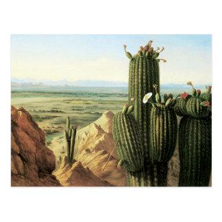 View from Maricopa Mountain Near the River Gila Postcard