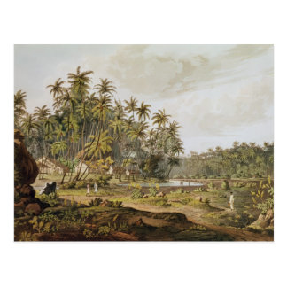 View near Point du Galle, Ceylon Postcard