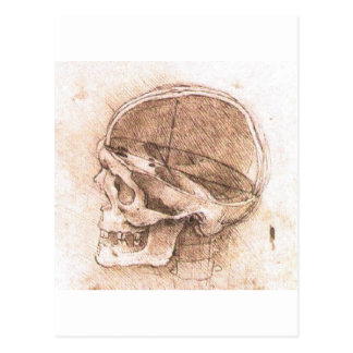 View of a Skull by Leonardo Da Vinci circa 1489 Postcard