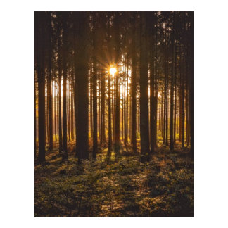 View of Black Trees and Sun Letterhead