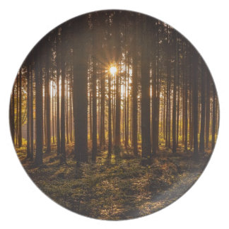 View of Black Trees and Sun Plate