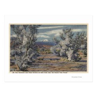 View of Mt. San Gorgonio & Palm Springs Postcard