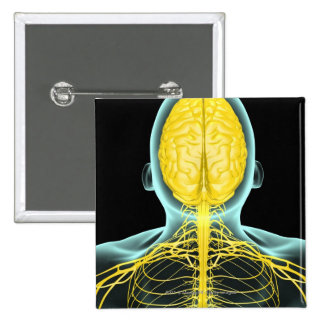 View of the nerves in the upper body from above 2 inch square button