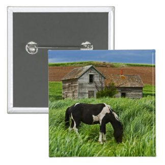 Viewing horses in a field in the Palouse 2 2 Inch Square Button