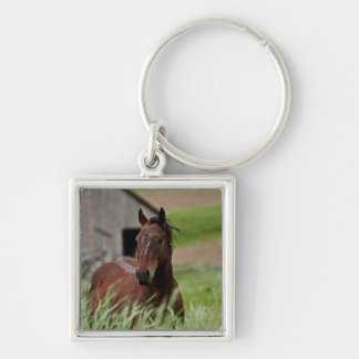 Viewing horses in a field in the Palouse Silver-Colored Square Keychain